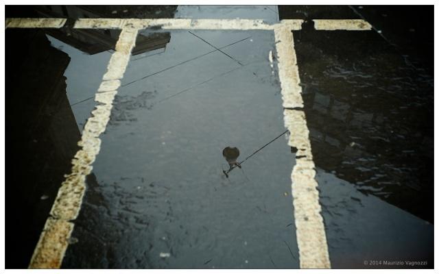 rain shoots 4