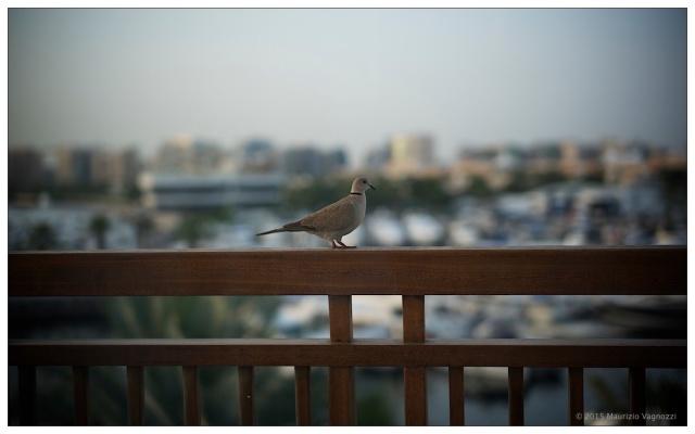 fat bird 1