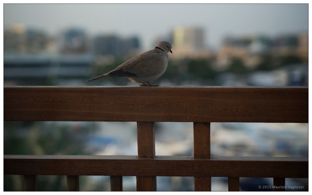 fat bird 3