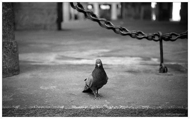 piccioni-1