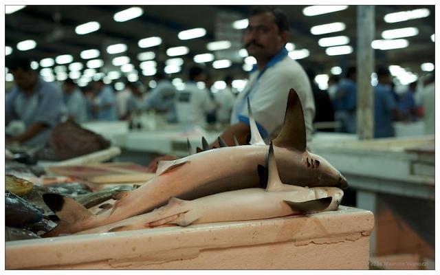 deira-fish-market-1